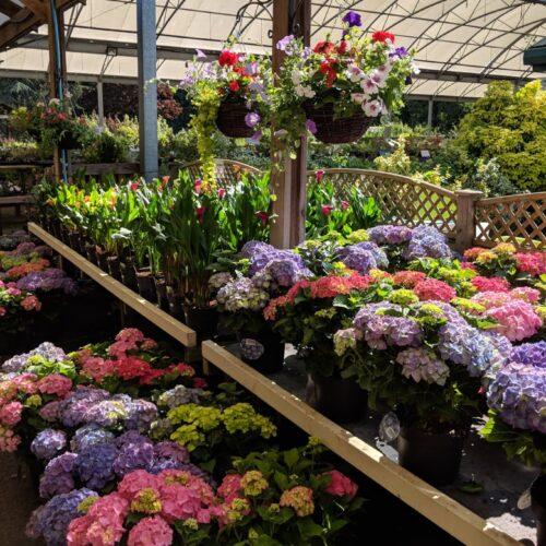 plants for sale at Avenue Nurseries Garden Centre in Alton
