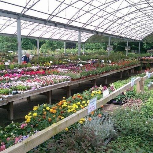 Plants for sale, Alton Garden centre